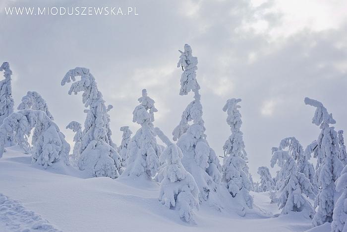1 (11)-zimowe-krajobrazy