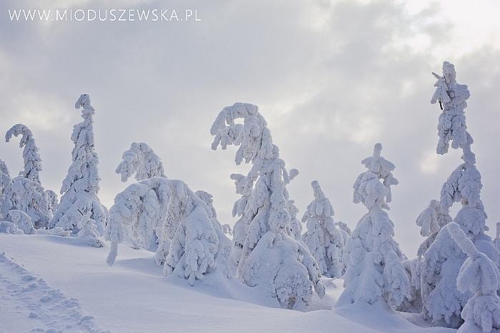 1 (12)-zdjecia-zimowe-polska