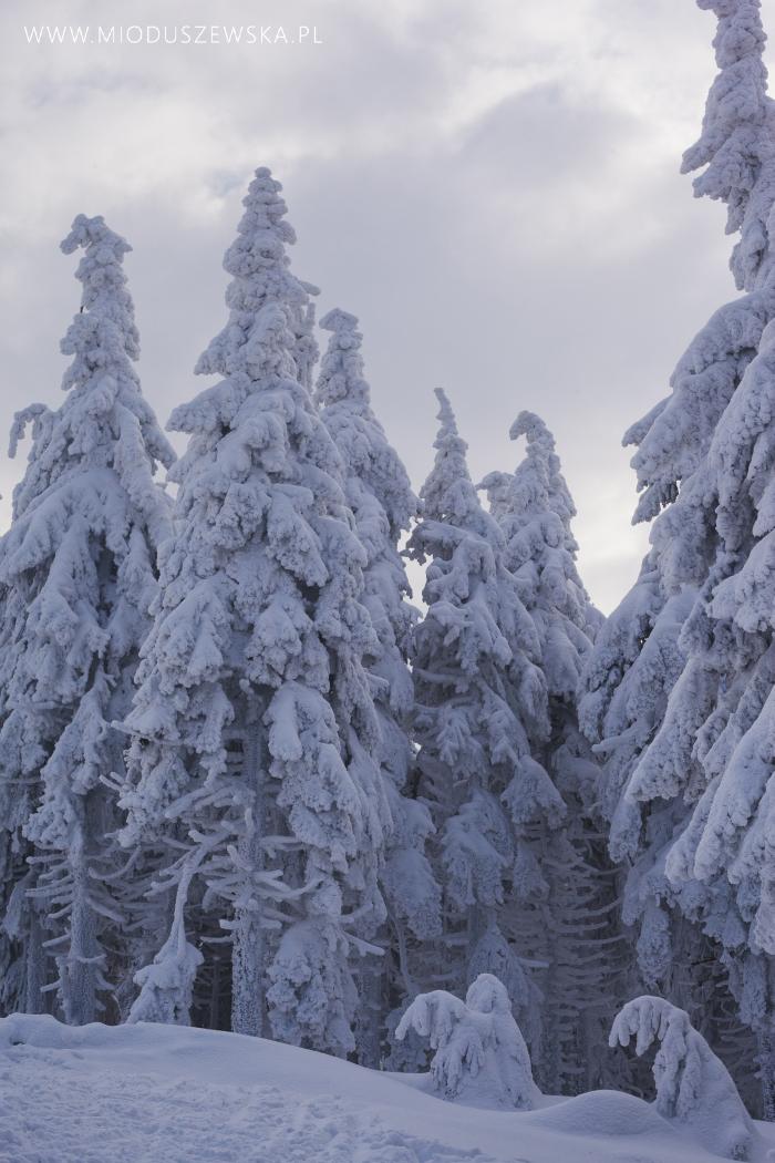 1 (19)-snieg-w-polsce