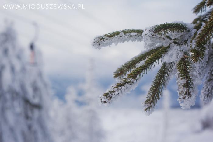 2 (4)-sesja-zimowa