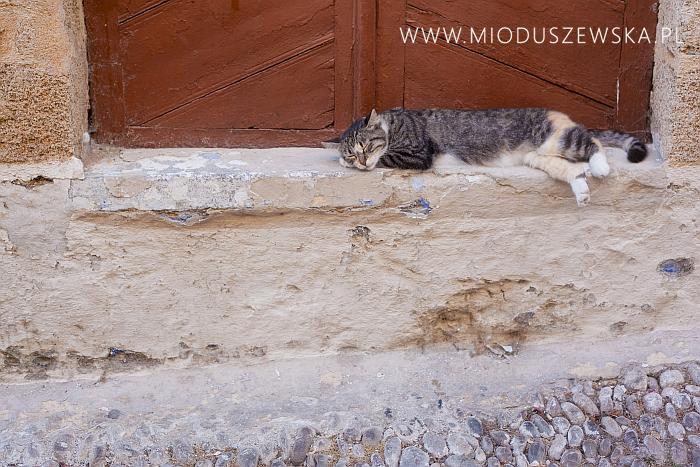 1 (18)-cats-rhodes