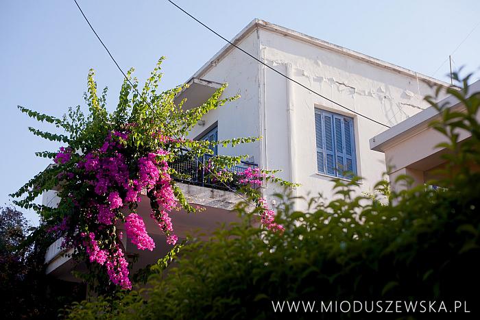 1 (22)-rodos-flowers