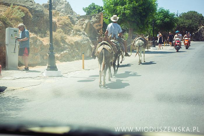 5-lindos-donkey