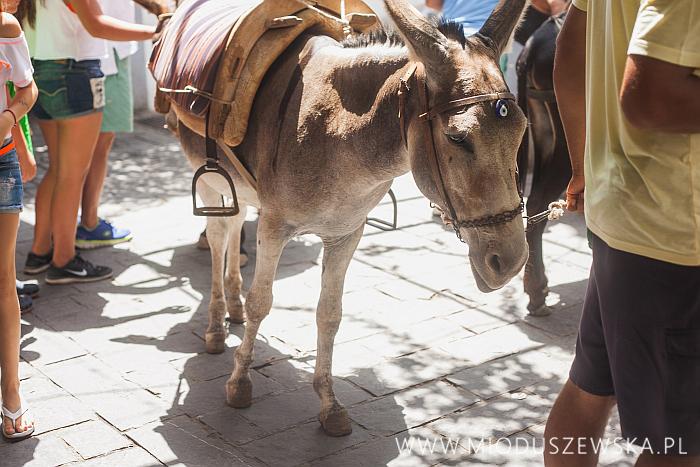 6-donkeys-lindos